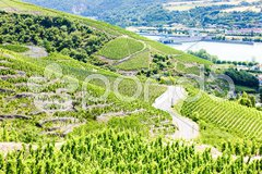Grand cru vineyards near Ampuis, Cote Rotie, Rhone-Alpes, France Stock Photos