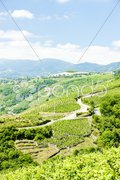 Vineyards of Cote Rotie, Rhone-Alpes, France Stock Photos