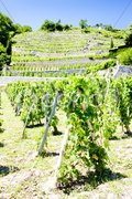 Vineyard of Chateau Grillet, Rhone-Alpes, France Stock Photos