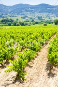 Vineyards near La Cadiere d'Azur, Provence, France Stock Photos