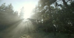 Sunbeams penetrate effectively in a pine forest at sunset Stock Footage