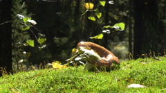 Mushroom on green moss. Close up. Slow motion. Stock Footage
