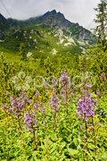 Vysoke Tatry (High Tatras), Slovakia Stock Photos
