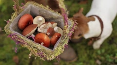 Woman Carries a Basket With Mushrooms in the Forest Stock Footage