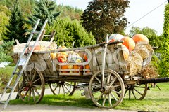 Still life of pumpkins on cart Stock Photos