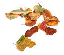 Multicolor autumn dry leafs Stock Photos