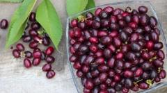 Cornelian cherry fruits Stock Footage