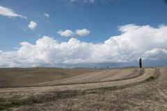 Cypress grove in Val 'd'Orcia Stock Photos