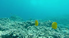 Underwater coral reef  landscape with colourful fish Stock Footage