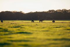 Herd of horses standing on farmland. Geesteren. Achterhoek. Gelderland. The N Stock Photos