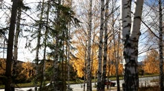 Larch and birch. Autumn city park. Natural beauty landscape Stock Footage