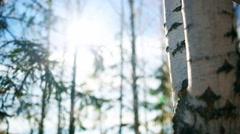 The trunk of a birch. The sun's rays in autumn park Stock Footage