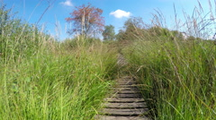 Meadow Trail in High Fens – Eifel Nature Park (Belgium). Stock Footage