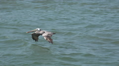Pelican flying on water Stock Footage