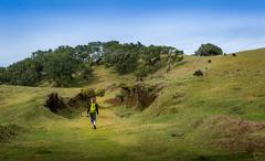 Woman walking on hiking path of Fanal plateau at Madeira island Stock Photos