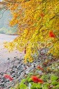 Autumnal nature Stock Photos
