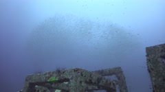 Huge school of barracudas Stock Footage
