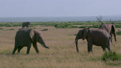 AFRICAN ELEPHANTS SPARRING AMBOSELI KENYA AFRICA Stock Footage
