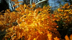 Autumn nature. The metal structure in the shape of a globe Stock Footage