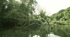 Movement along the dry dead tree in a river surrounded by ancient forest Stock Footage