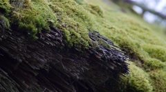 Close up of thatched roof with moss of old wooden barn, 4k footage Stock Footage