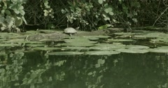 Water turtle immersed in the water in slow motion Stock Footage