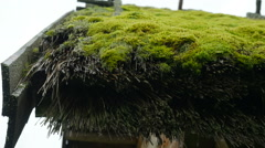 Close up of thatched roof with moss of old wooden house, Full HD footage Stock Footage