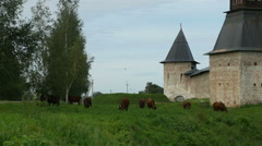 Herd of cows grazing near the walls of the male Orthodox monastery, Full HD shot Stock Footage