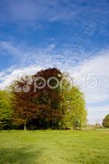 Landscape, Gelderland, Netherlands Stock Photos