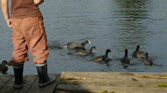 Closeup of a little boy stands near the pond & feeding the ducks, Full HD shot Stock Footage