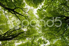 Forest, Brittany, France Stock Photos