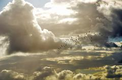 Flock of birds flying in heavenly clouds Stock Photos