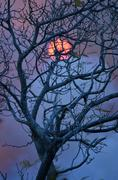 Haunting sunset behind a leafless tree Stock Photos