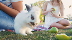 Cute white rabbit washing up on picnic, slow motion Stock Footage