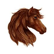 Brown horse head sketch with arabian racehorse Stock Illustration