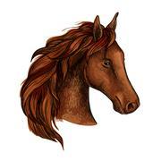 Brown stallion horse head sketch Stock Illustration