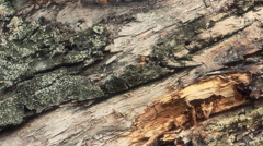 Old tree trunk close up Stock Footage