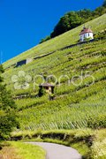 Grand cru vineyard and Chapel of St. Urban, Thann, Alsace, France Stock Photos