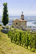 Grand cru vineyard and Chapel of St. Christopher, L Stock Photos