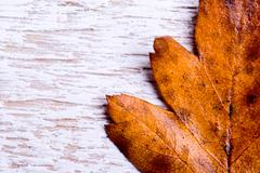 Autumn composition. Brown leaf on white wooden background Stock Photos