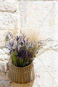 Bunch of lavenders, Aiguines, Var Departement, Provence, France Stock Photos