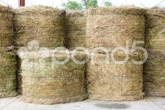 Dried lavenders, lavender distillery, Provence, France Stock Photos
