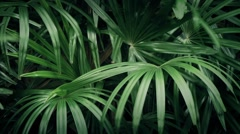Exotic Plants In The Wind Stock Footage