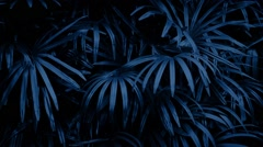 Jungle Plants Swaying At Night Stock Footage