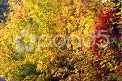Autumnal trees Stock Photos