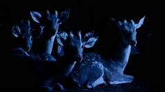 Group Of Deer Look Up At Night Stock Footage