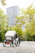 Carriage in Central Park, New York City, USA Stock Photos
