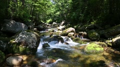 Beautiful mountain river in the wild forest. Siberia, Russian Far East Stock Footage