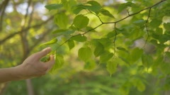 Man tenderly touches tree leaves with love for nature Stock Footage
