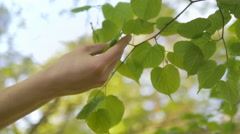 Hand tenderly touches tree leaves with love for nature Stock Footage